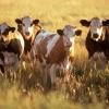 More Fiber Than Cows: Report Confirms South Dakota's Rural Internet Networks Above Average