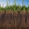 Compost Climate Connections Webinar Series: How Compost and Cover Crops Sequester Soil Carbon