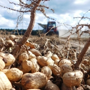 In Civil Eats: The Peanut Industry Has a Monopoly Problem