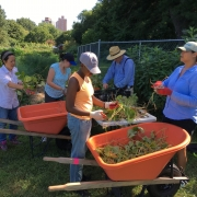 Botanical Garden in NYC is a Hub for Composting, Food Recovery, Locally Grown Food (Episode 93)