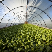 Webinar: Compost & Soil: Restoring Health and Rebalancing the Climate with Calla Rose Ostrander & Jean Bonhotal