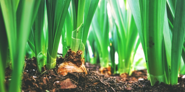 Compost Climate Connections Webinar Series: Compost Sequesters Carbon & Delivers Other Ecosystem Benefits
