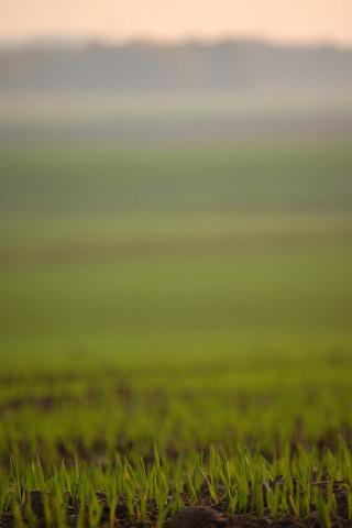 grassroots -  Daniel Schroeder flickr