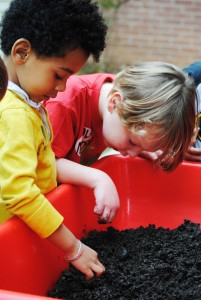 Harvesting the Worm Bin with PreK