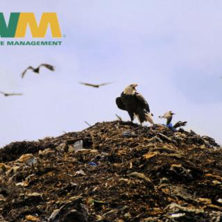 Bald Eagle Landfill