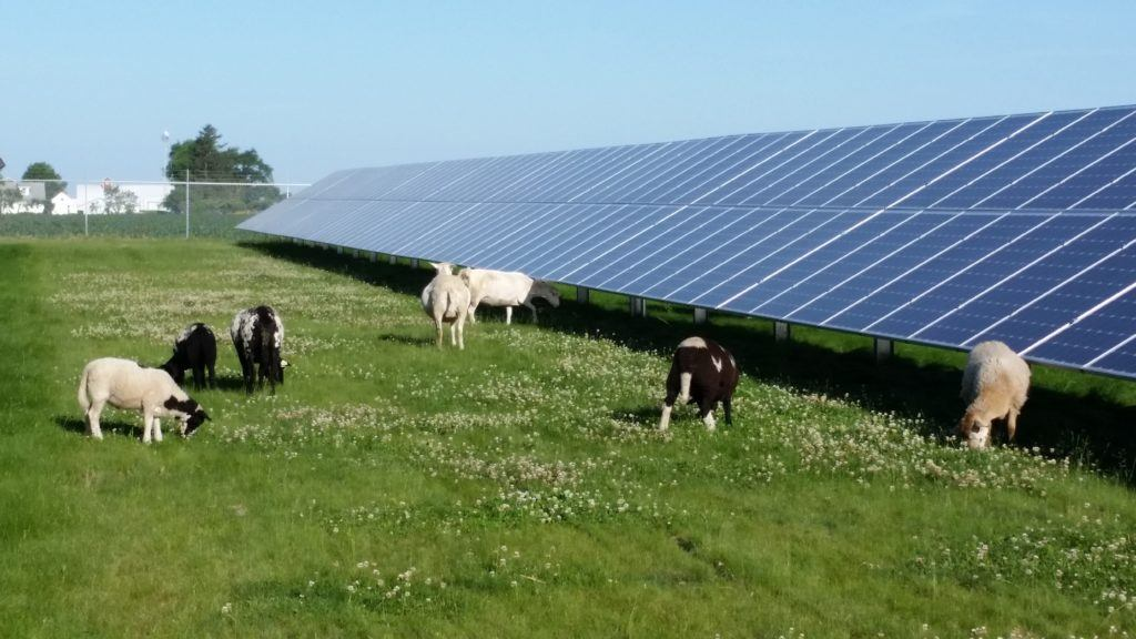 Thanks To Co Op Small Iowa Town Goes Big On Solar