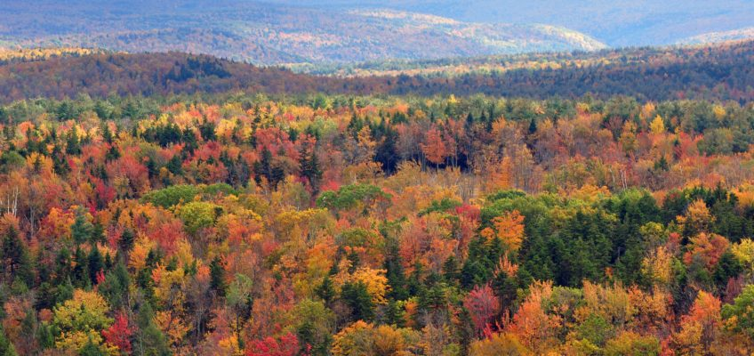 There's Nothing Magical About Vermont (Episode 46)