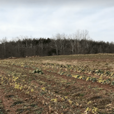 Photo of field containing rows of crops on One Acre Farm in Montgomery County, Maryland