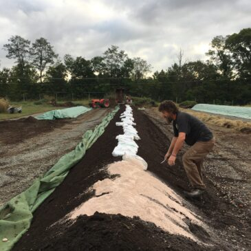 Farmer mixing azomite into a compost windrow