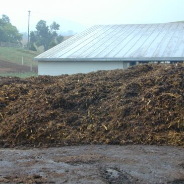 Newly formed dairy manure-woody waste windrow - Shen Vall
